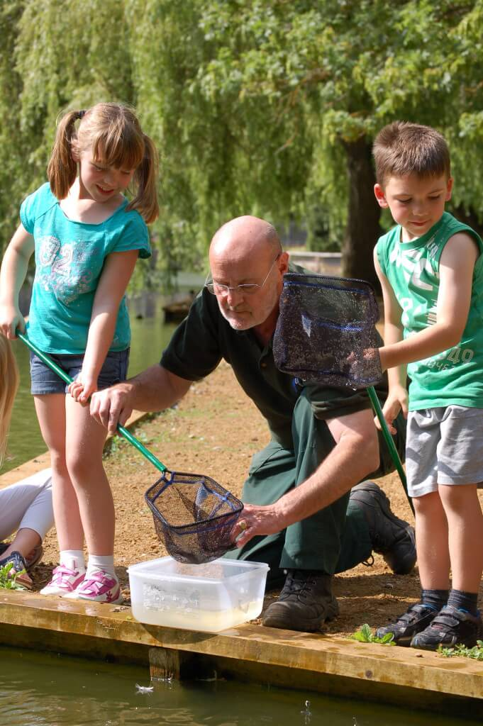 Pond Dipping Detective Sessions in the Summer Holidays