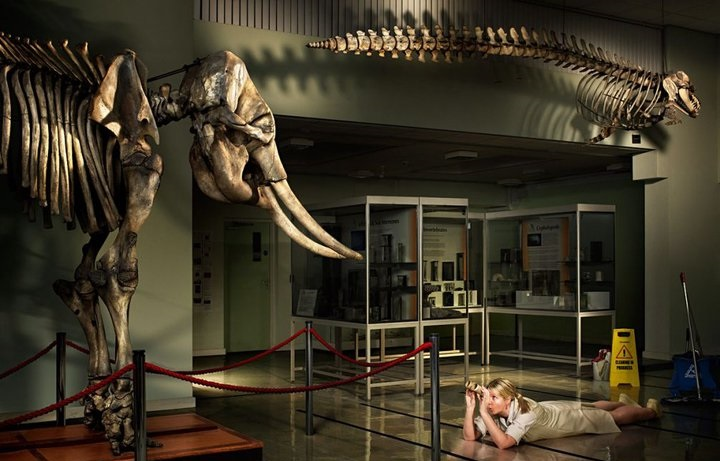Visit The Cole Museum of Zoology